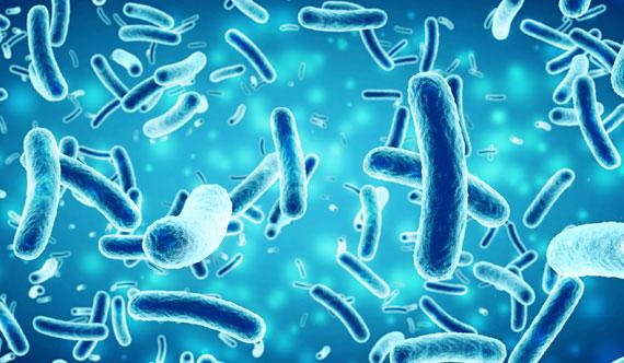 Le microbiote..?